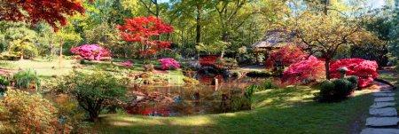 Photo pour Panorama de fond nature dans le parc japonais - image libre de droit