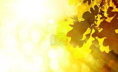 ID de imagen B52161731