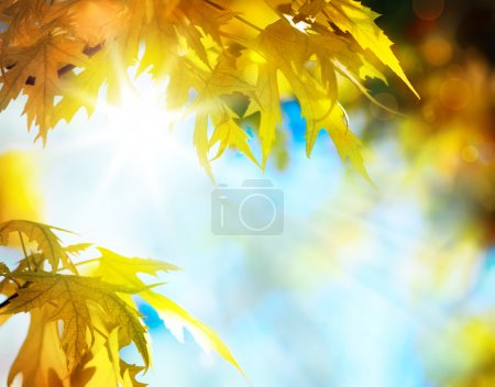 Photo for Maple autumn leaves - Royalty Free Image