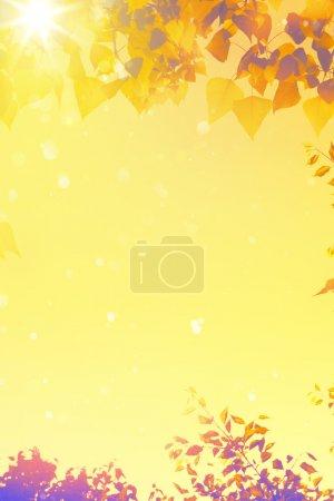 ID de imagen B53441605