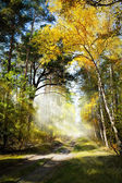 art Beautiful morning in the misty autumn forest with sun rays
