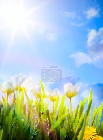 arte primavera flores fondo