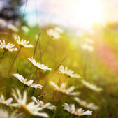 art abstract nature background with summer flower in grass