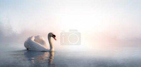 Photo pour Cygne flottant sur l'eau au lever du soleil du jour - image libre de droit