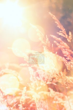 Photo for Art autumn sunny nature background - Royalty Free Image