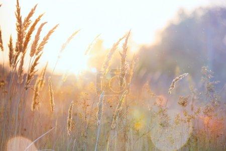 Foto de Arte otoño naturaleza soleada fondo - Imagen libre de derechos
