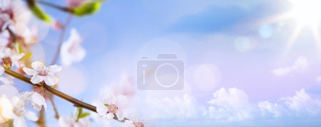 Photo for Spring flowers on the blue sky background - Royalty Free Image