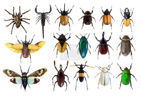Photo pour Modèle de bug régulier sur un fond blanc - image libre de droit