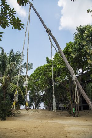 Swing in Ko Pha Ngan in Thailand