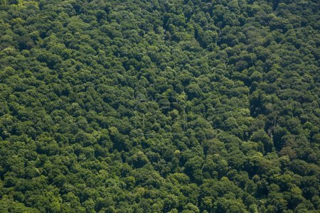 Green mountain forest view from above...