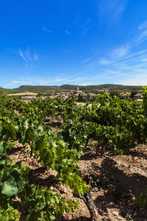 Town Cruzy in Languedoc-Roussillon