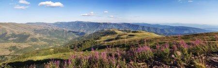 Photo pour Détail de la montagne Stara planina en Serbie - image libre de droit