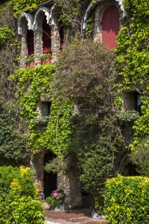 House with green ivy