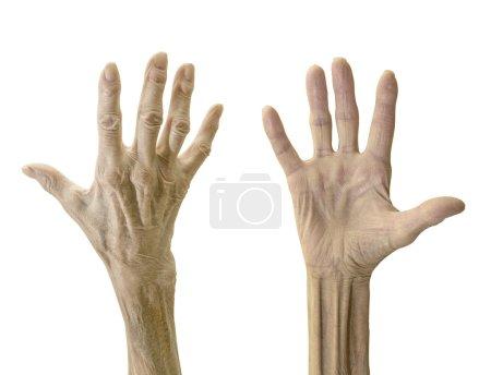 Photo pour Vieille femme mains isolées sur blanc - image libre de droit