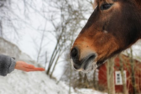 Human hand and horse