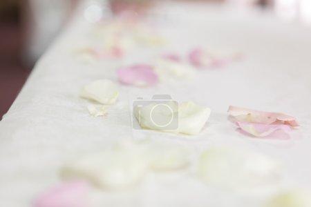 tender rose petals