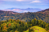 Autumn mountain landscape with colorful trees in forest