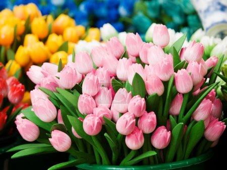 Dutch tulips in Netherlands