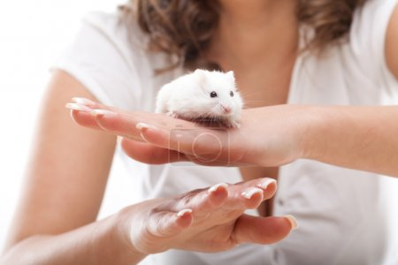 White mouse in female hands