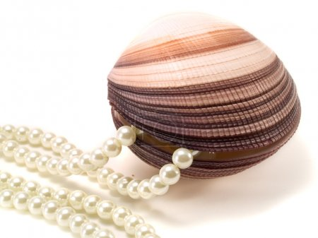 Shell With Pearls on background