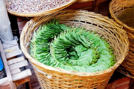 Photo for Betel Nut leaves. Betel leaves are used to wrap areca nuts, lime and tobacco. The gum sized bundle is chewed to produce a sense of wellbeing and euphoria. In small quantities it produces a response similar to caffeine, while in large doses the effect - Royalty Free Image