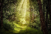 Sun rays through branches in beautiful magic forest