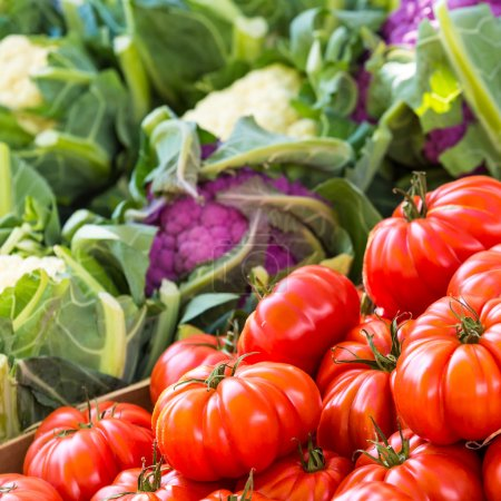 Photo for Just harvested tomatoes for sale at local farm market. Copenhagen, Denmark. - Royalty Free Image