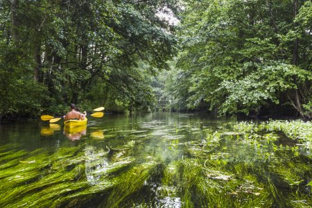 Photo for Kayaking on the Rospuda river, Poland - Royalty Free Image