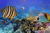 Coral reef with fire coral and exotic fishes at the bottom of co