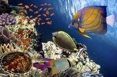 urtle (Hawksbill Sea Turtle) underwater