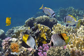 Colorful coral reef with hard coral