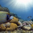Tropical Fish on Coral Reef in the Red Sea...