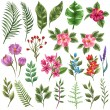 Set of traditional and tropical flowers and leaves...