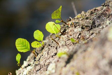 Foto de Nuevo brote y hoja en el tronco del árbol viejo - Imagen libre de derechos