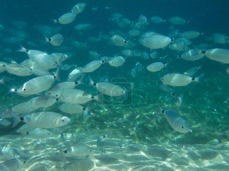 Underwater world of Sardinia