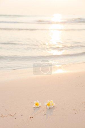 Photo pour Fleur sur le sable. Fleur blanche sur la plage dans la matinée la lumière du soleil brille par derrière . - image libre de droit