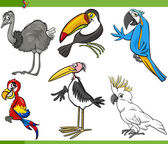 Birds cartoon set illustration