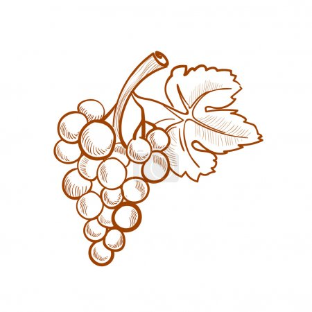 Illustration for Illustration of hand drawn grapes, doodle style - Royalty Free Image
