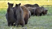 Matka jí medvěd v lese letní