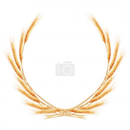 Beauty golden wheat. EPS 10