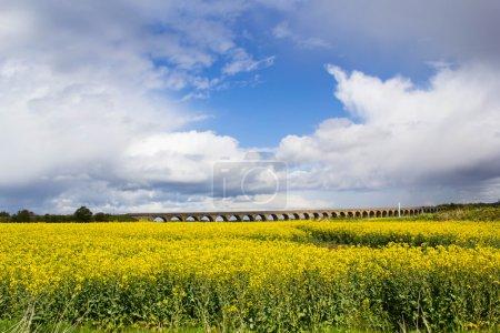 Photo pour Beau paysage avec champ vif de graines de colza au printemps et beau ciel - image libre de droit