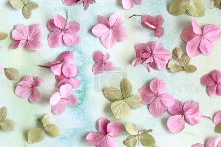Photo pour Fond floral artistique subtil avec des fleurs d'hortensia - image libre de droit