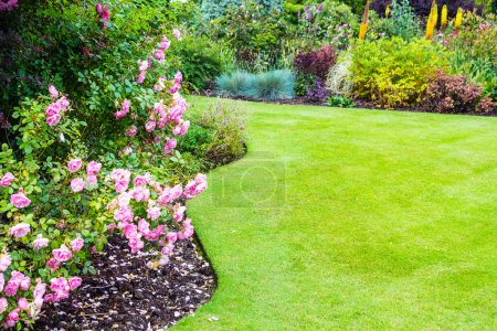 Photo for Lovely light pink roses bushes in victorian garden - Royalty Free Image