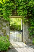 Beautiful old garden gate covered with green ivy.