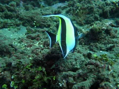 Thriving  coral reef alive with marine life and  tropical fish
