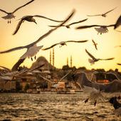 "Постер, картина, фотообои ""Чайки над Золотой Рог в Стамбуле на закате"""
