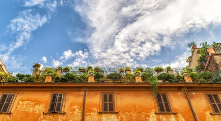 Flowers on the roof of an old house in the center of Rome