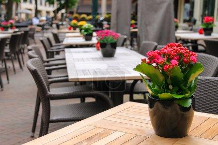 Photo pour Pots avec des fleurs décoratives sur les tables de café de rue en plein air - image libre de droit