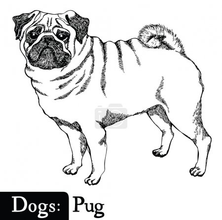 Dogs Sketch style Pug