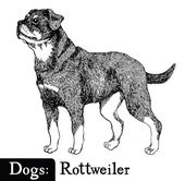 Dogs Sketch style Rottweiler